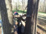 boys tree house 2