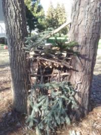boys tree house 6