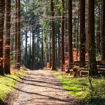 Le chemin philosophique