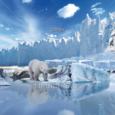 Stock Photo Composition Polar Bear Alone On Iceberg