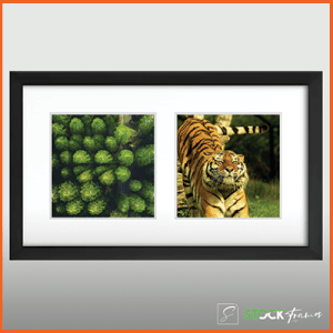 Collage Picture Frames (Two Images)