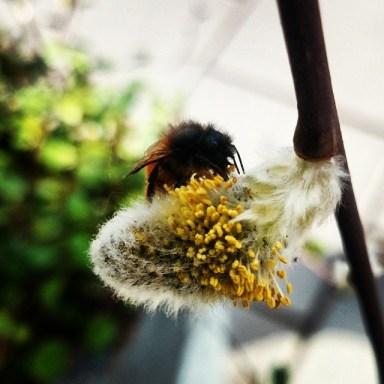 пчелки - природа и погода в Стокгольме
