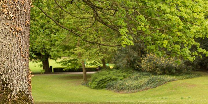 green park free stock image