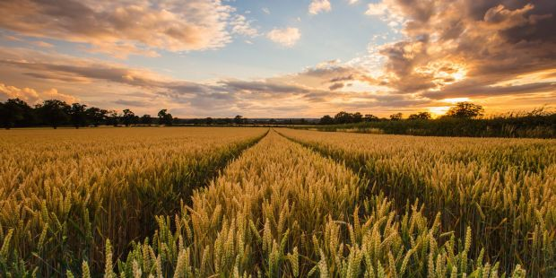 Top Agriculture Stocks for Q2 2021