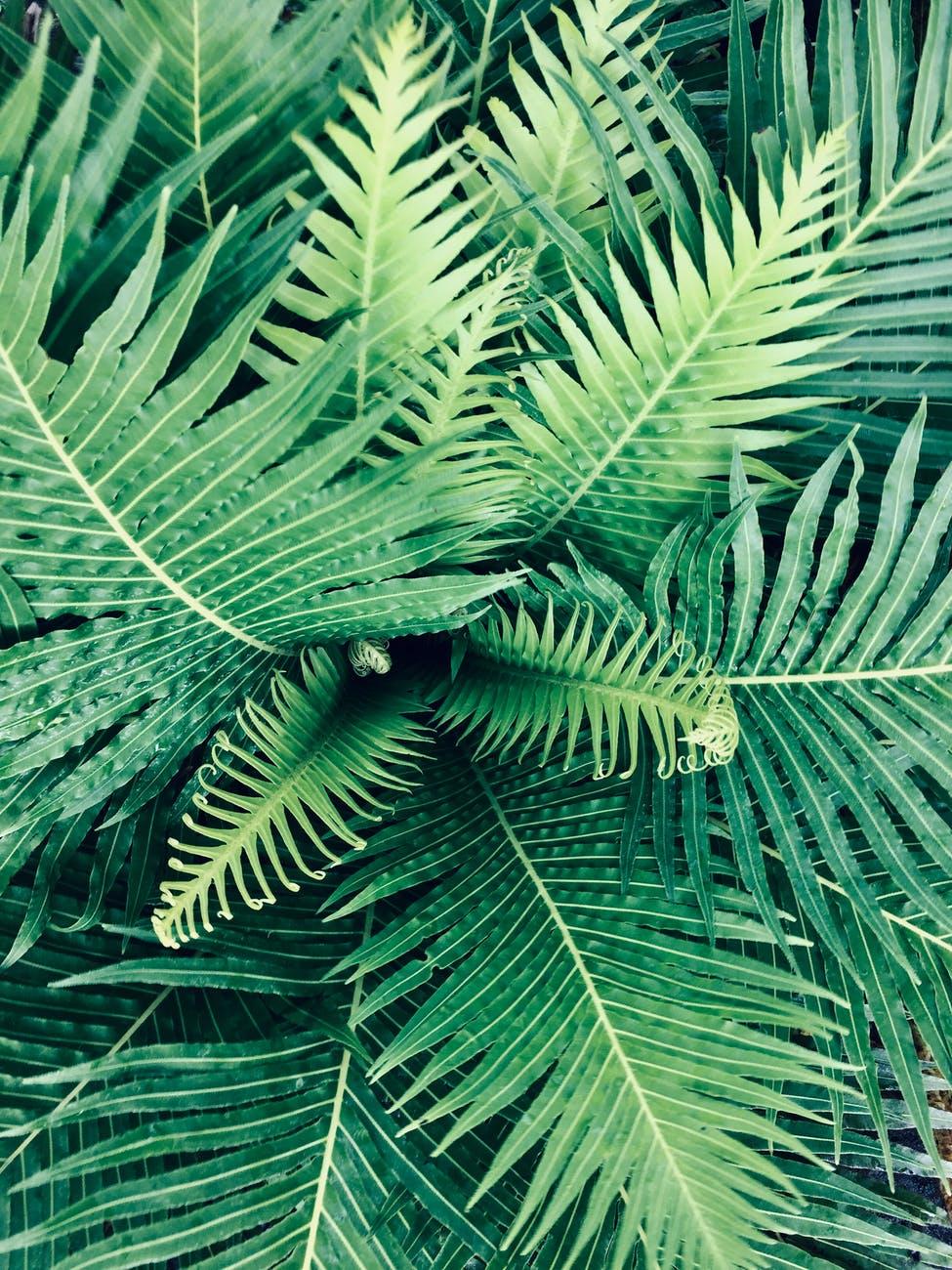linear green leaf plant