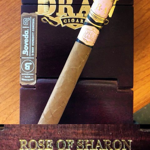 rose of sharon lancero