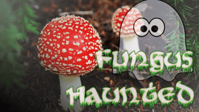 Photo of Sdfiles #40 – Fungus Haunted
