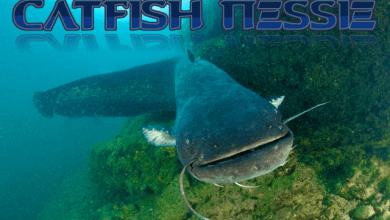 Photo of Sdfiles #51 – Catfish Nessie