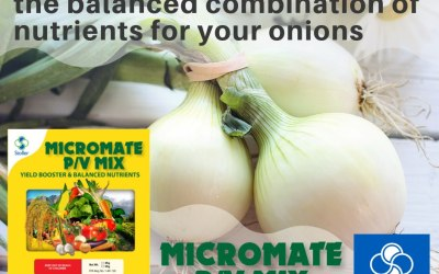 Yield Booster that Contains The Balanced Combination of Nutrients for your Onions