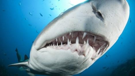 Что общего у людей и акул - гены, отвечающие за развитие зубов