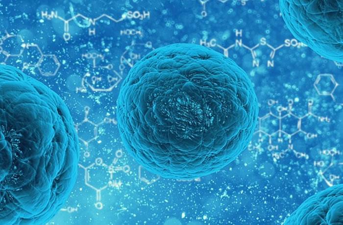 Как нановолокна с антибиотиками действуют на двувидовоую биопленку и стволовые клетки пульпы