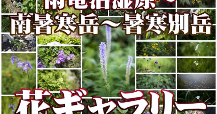 【花ギャラリー】雨竜沼湿原~南暑寒岳~暑寒別岳