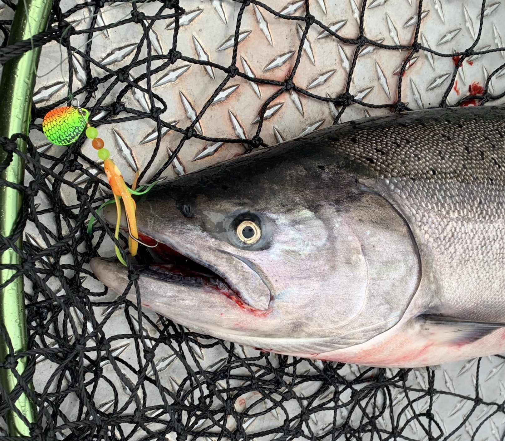 Fishing the Dirty Troll on the Columbia for Fall Chinook