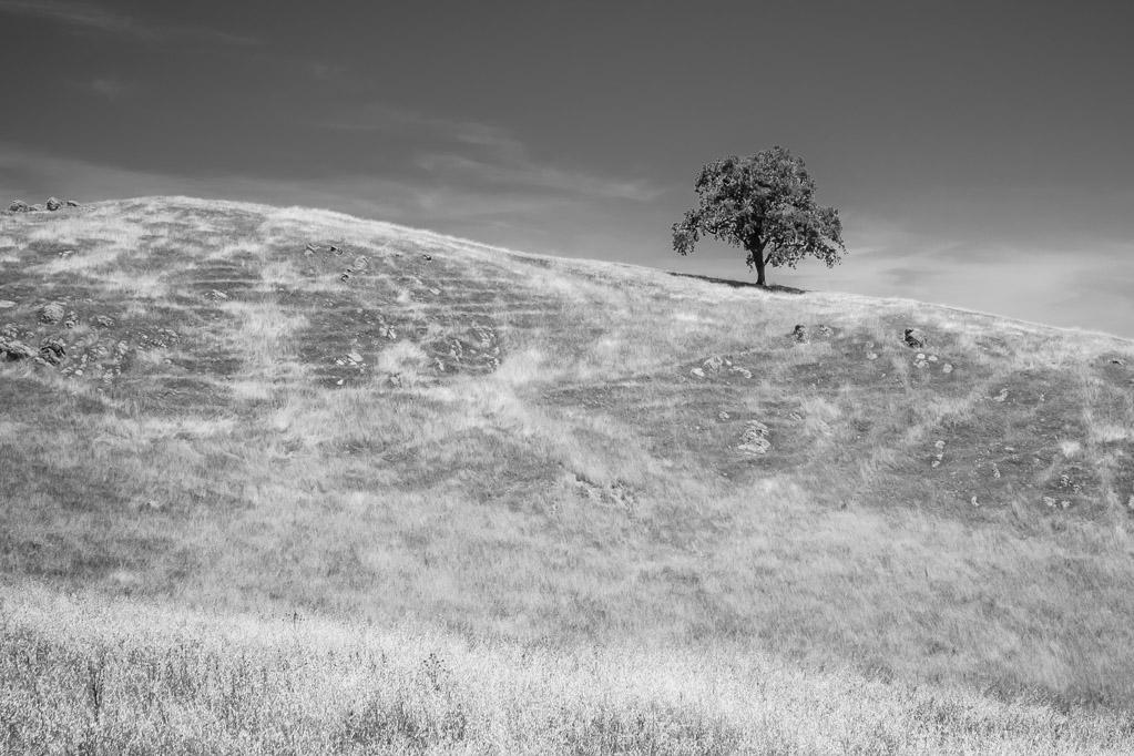 Vista Preserve, San Jose CA