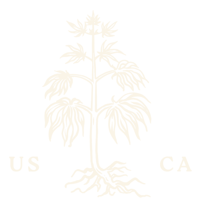 stoned root logo of cannabis plant with leaves and exposed roots