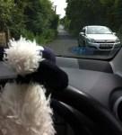 shaun driving