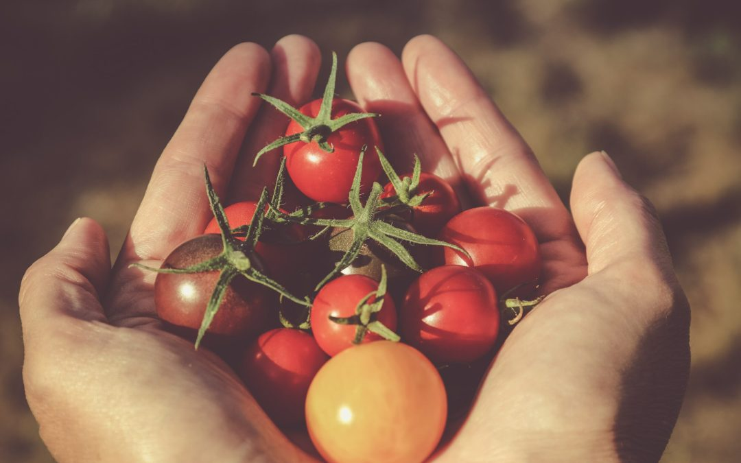 Start Your Vegetable Garden
