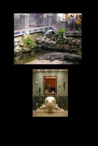 Steinhart Aquarium | Golden Gate Park | San Francisco CA