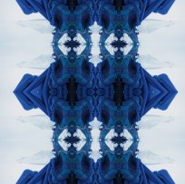 Kvera Blue Horned Blue Bird , archival inkjet print on rag paper, and on wallpaper, 2013