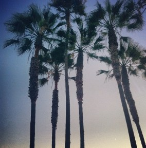 Palm Trees & LA-- what more could you ask for!