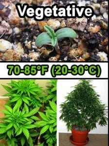 veg cannabis temperature