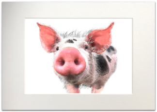 Pig Signed A4 Mounted Print