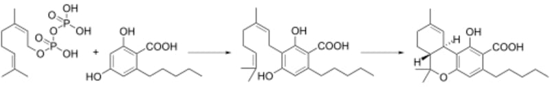 biosynthesis