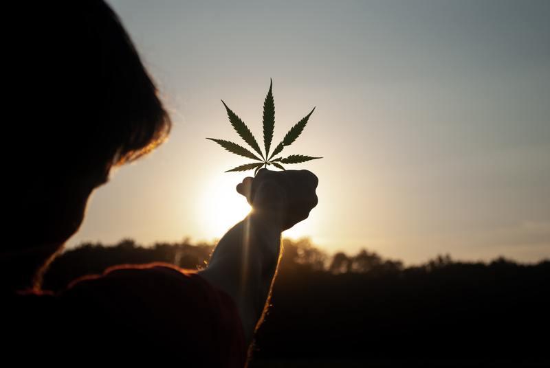holding up marijuana leaf