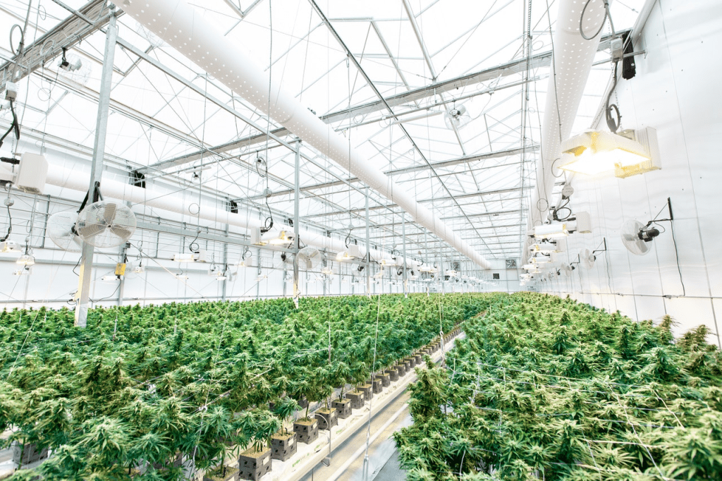 greenhouse for weed stock updates