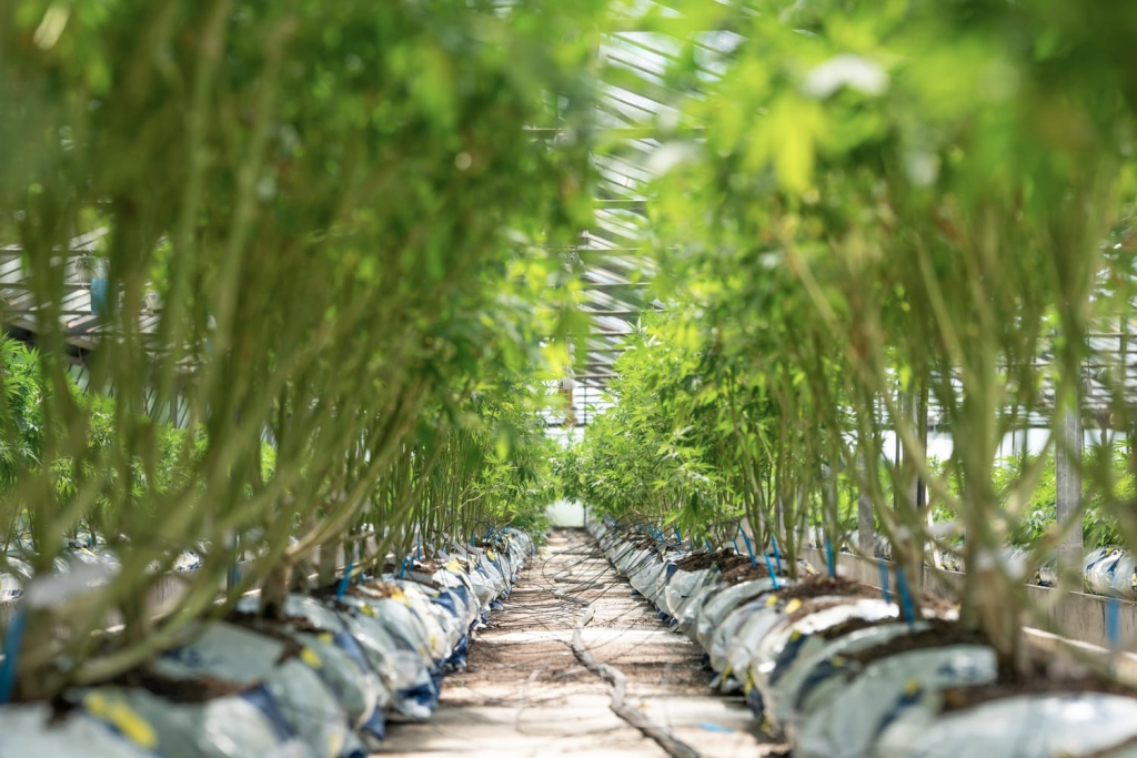 top cannabis stocks to buy in summer 2021