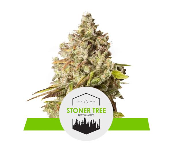 Marijuana online bestellen