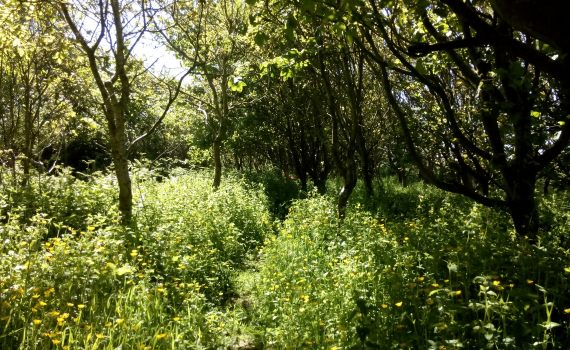 The woods at Stones Cottages are bursting into life. Wildflowers, badgers, butterflies and of course the trees.