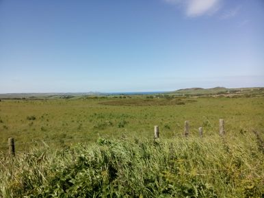 The sea beckoning from the flower meadow at Stones Cottages
