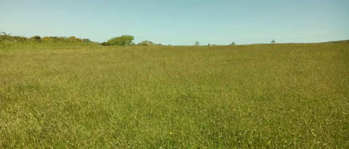 The wild flower meadows swaying gently in the wind at Stones Cottages