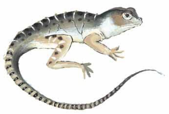 Half an Eggshell large lizard