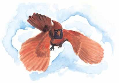 Look bird flying in the sky