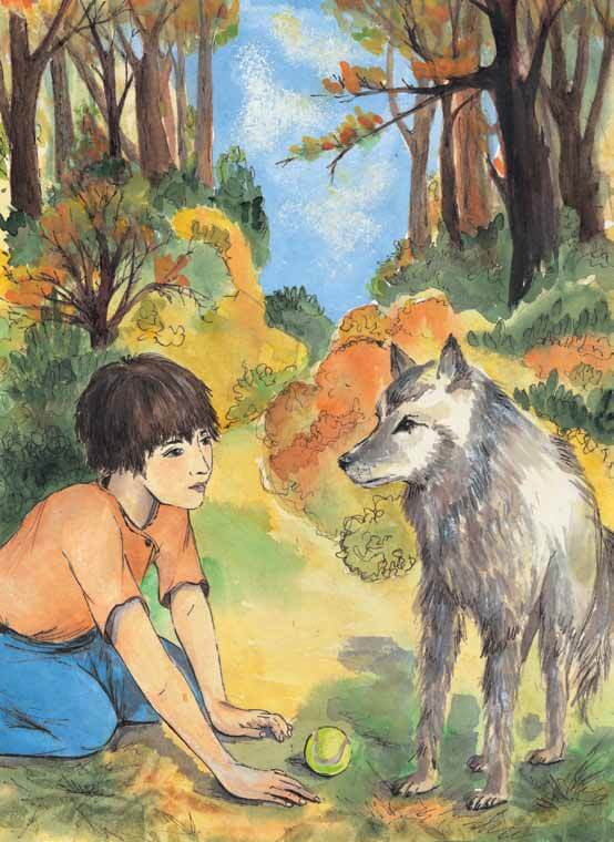 Window into the Wild boy is face to face with wolf