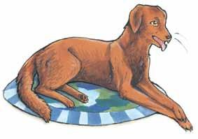 The Three Wishes dog
