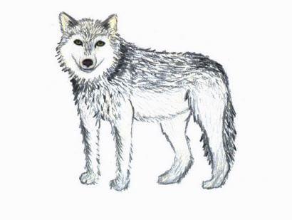 Shannon werewolf