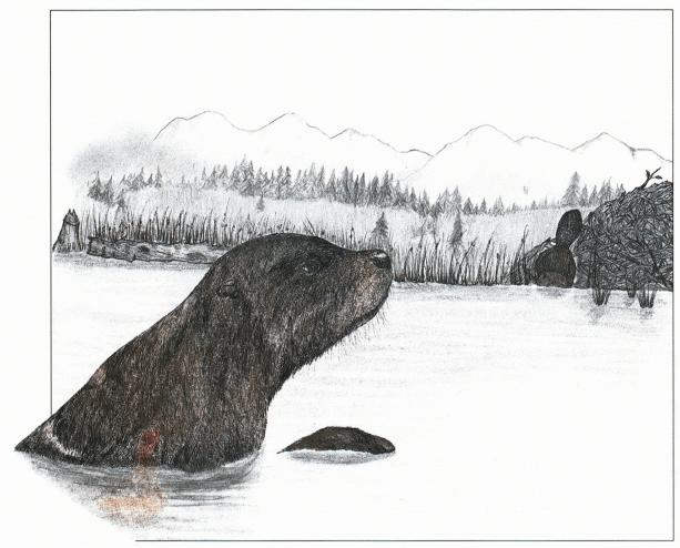 Roscoe a beaver