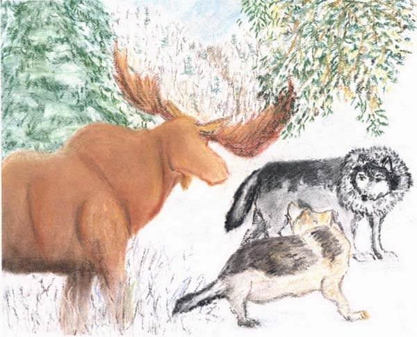 the hunt moose and two wolves