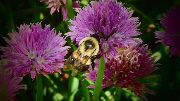 Buzzing Among Flowers