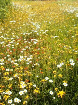 Adam & Jackie's Wildflowers