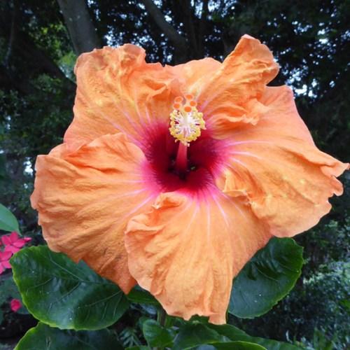 Orange Flower Web