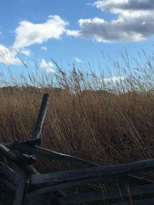 The Wheat Field at Gettysburg, Pennsylvania