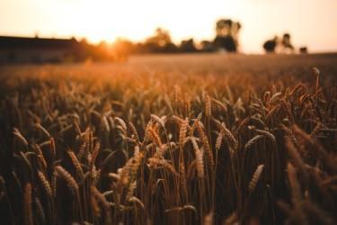 food-sunset-love-field-medium
