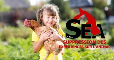 S.E.A. sauve des milliers de poules