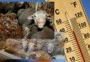 Canicule – Nous exigeons l'arrêt du transport des animaux vers les abattoirs !