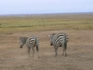 Good-bye, Amboseli!