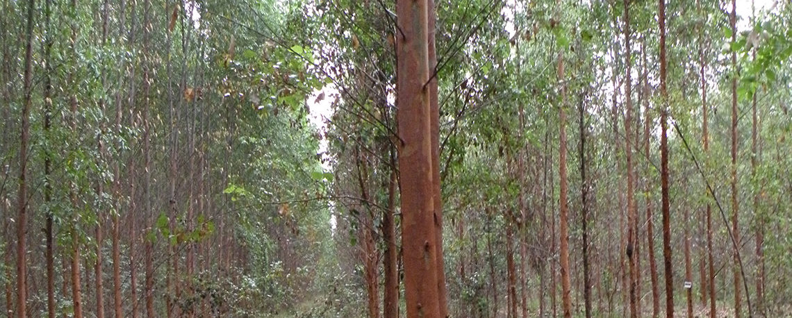 Video: Genetically Engineering Trees to Grow More Densely--Social & Ecological Impacts